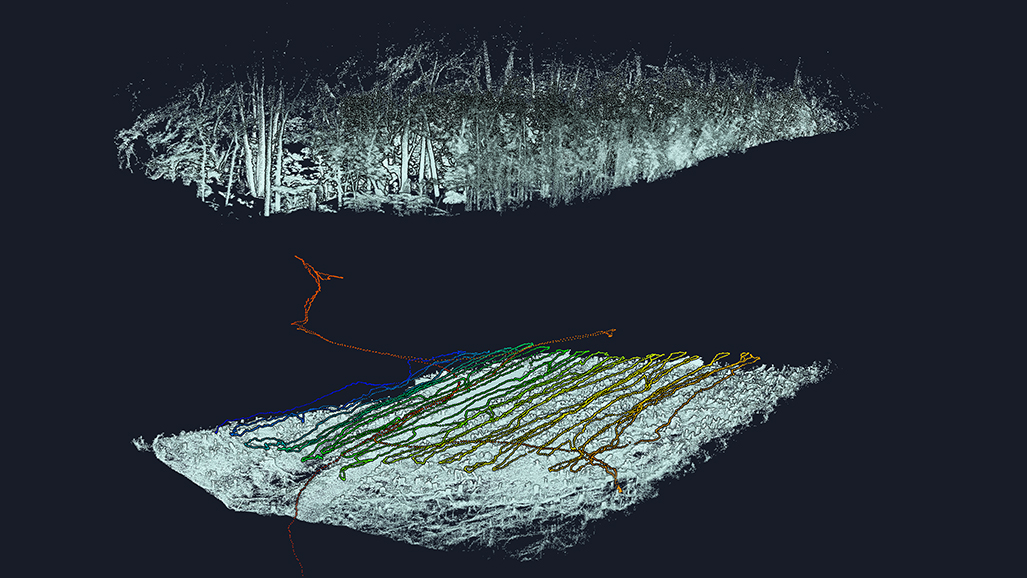 Two views of a point cloud, showing the topology of a dense forest from top and bottom views.